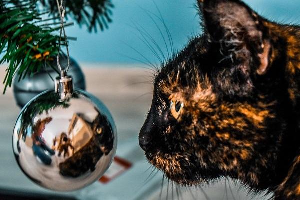 """Psycholog Táborský radí, jak si udělat """"Mindful Vánoce"""""""